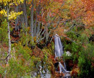 Parque Natural del Hayedo de Tejera Negra.